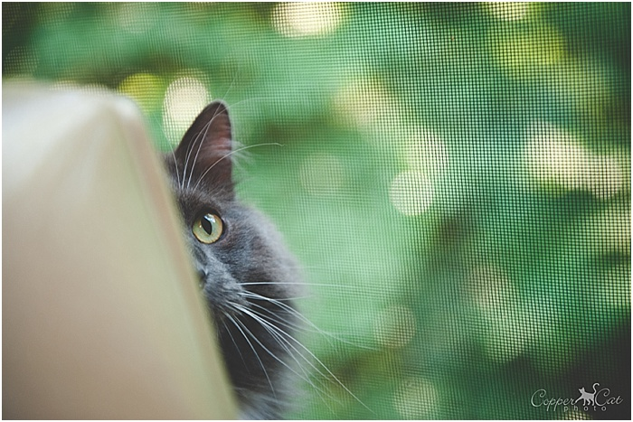 Boscoe Peek by Copper Cat Photo_0001