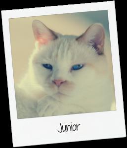 JuniorSnapshot2