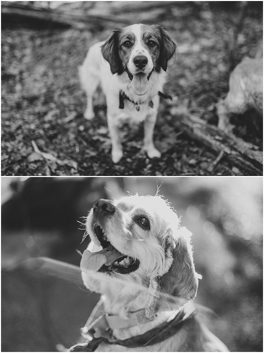 An Engaging Time with Mowgli and Luna ~ L.A. Birdie Photography_0002