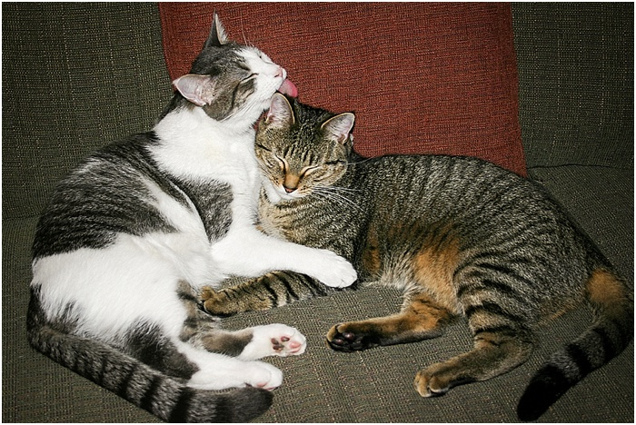 BFFs (Best Feline Friends) ~ Shanna Edberg Photography_0001
