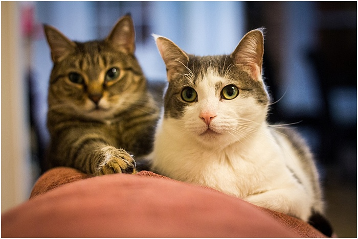 BFFs (Best Feline Friends) ~ Shanna Edberg Photography_0002