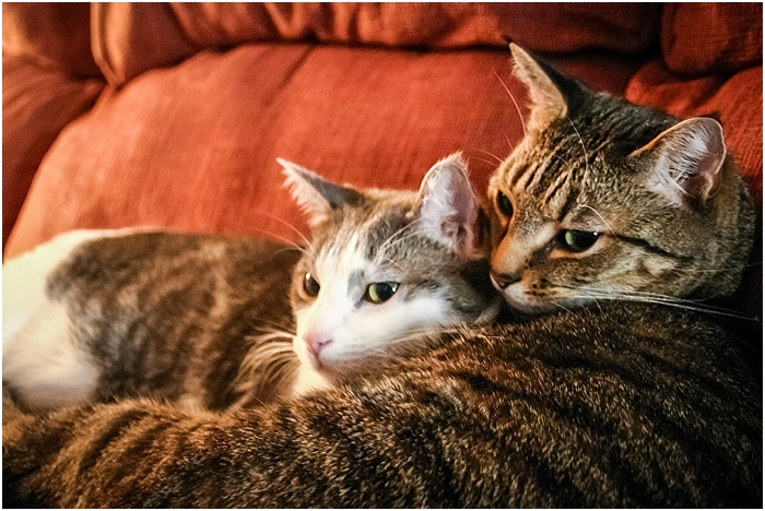 BFFs (Best Feline Friends) ~ Shanna Edberg Photography_0004