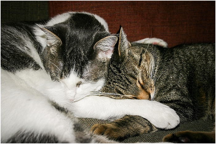 BFFs (Best Feline Friends) ~ Shanna Edberg Photography_0007