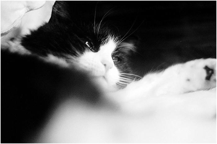 Cats on Film ~ Analog Wedding_0001