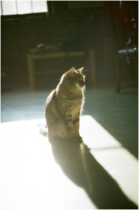 Cats on Film ~ Analog Wedding_0005