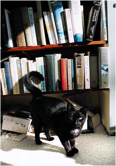 Cats on Film ~ Analog Wedding_0008