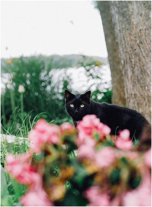 Cats on Film ~ Analog Wedding_0009